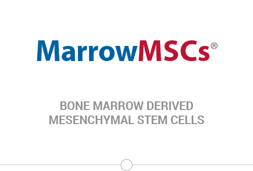 Bone Marrow Derived Mesenchymal Stem Cells
